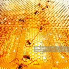 Bumble Bee Diagram 65 Mustang Dash Wiring Bees On With Honeycomb Pattern Stock Photo Getty Images