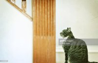 Cat Looking Up Stairway Stock Photo | Getty Images