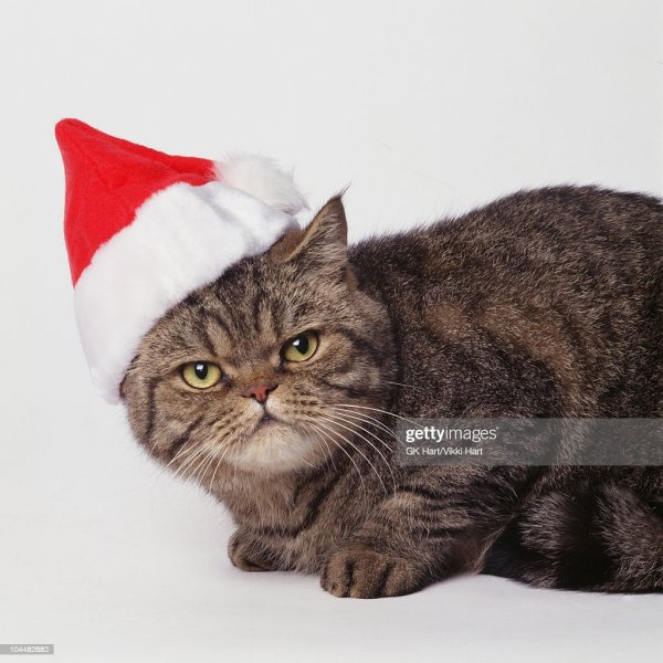 Cat Wearing Santa Hat Stock Photo | Getty Images