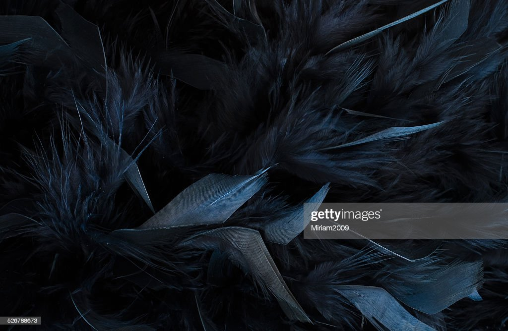 Pink Feathers Falling Wallpaper Free Black Feather Images Pictures And Royalty Free