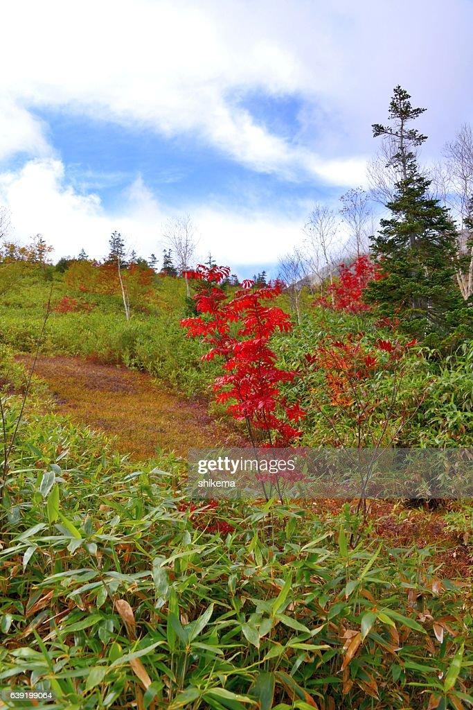 Colored Leaves Of Tsugaike Kogen Nagano Japan Stock Photo