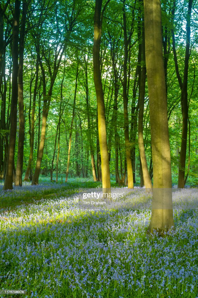 Dappled Sunlight : dappled, sunlight, Dappled, Sunlight, Stock, Pictures,, Royalty-free, Photos, Images, Getty