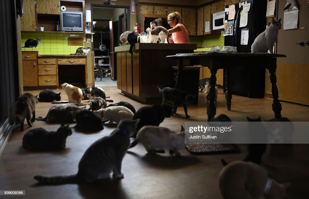 cats in the kitchen timer deanna salamanca prepares food for at cat lady turns california home into no cage sanctuary news photo