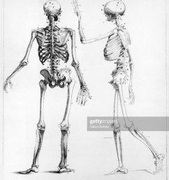 human skeletons news photo [ 850 x 1024 Pixel ]