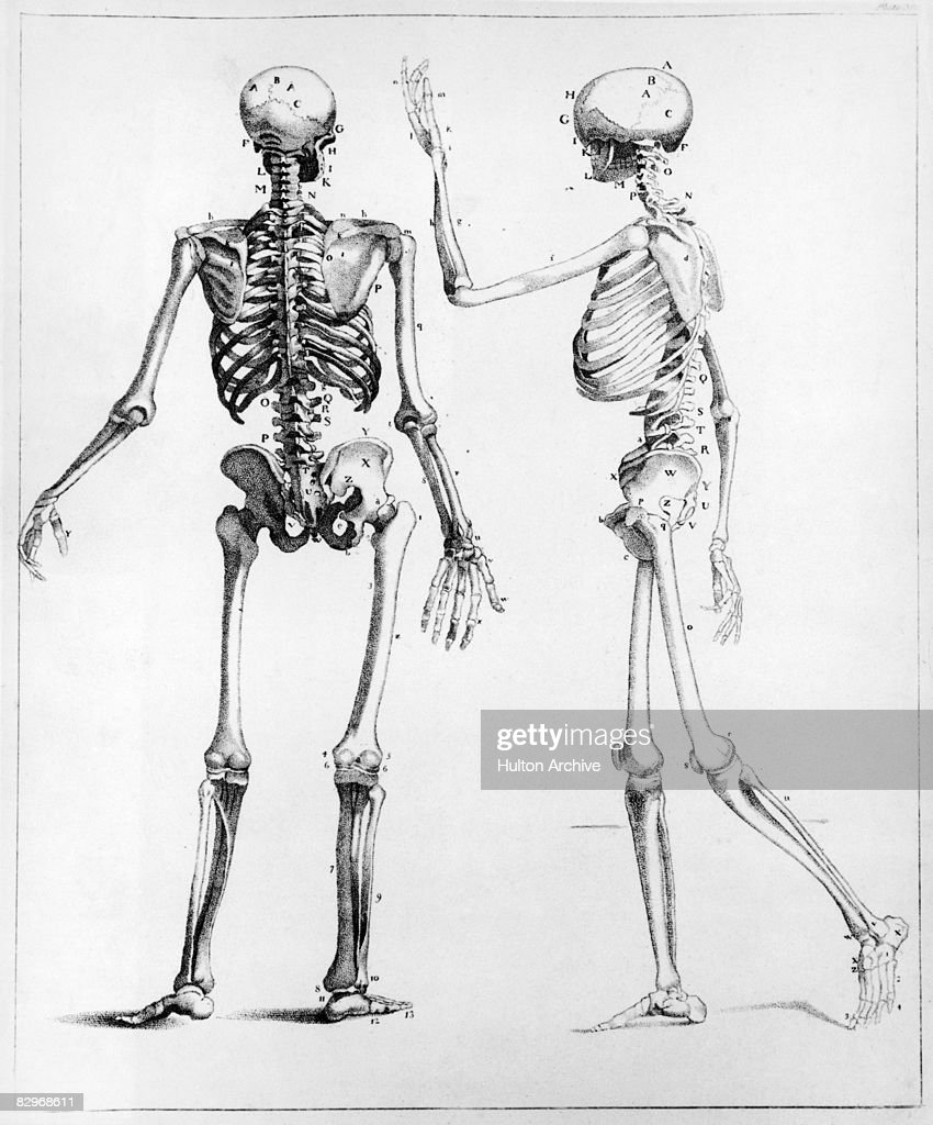 human bone structure diagram pir sensor wiring skeleton stock photos and pictures a showing back side views of the circa 1900