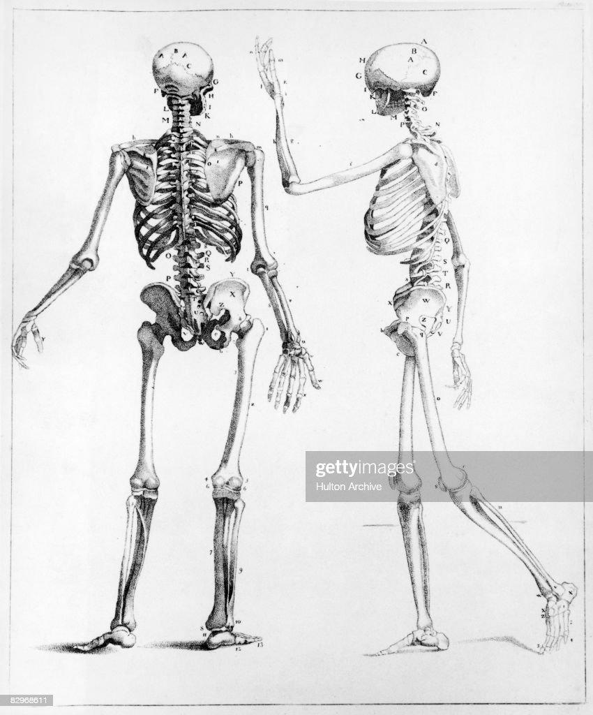 hight resolution of human skeletons news photo