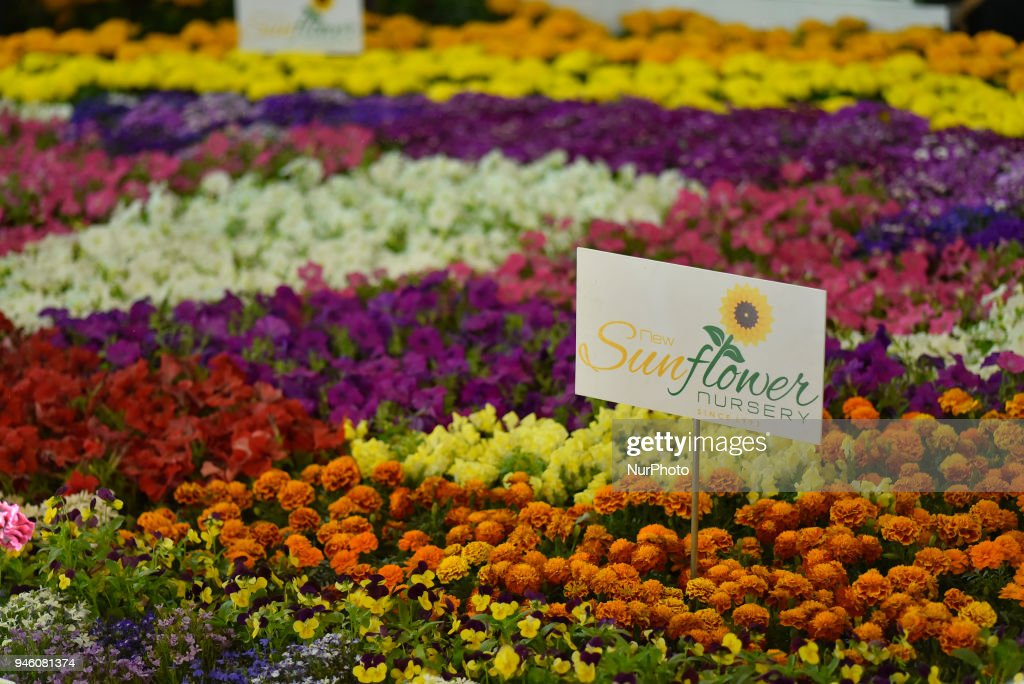 Flora Expo 2018 In Kathmandu Photos and Images   Getty Images