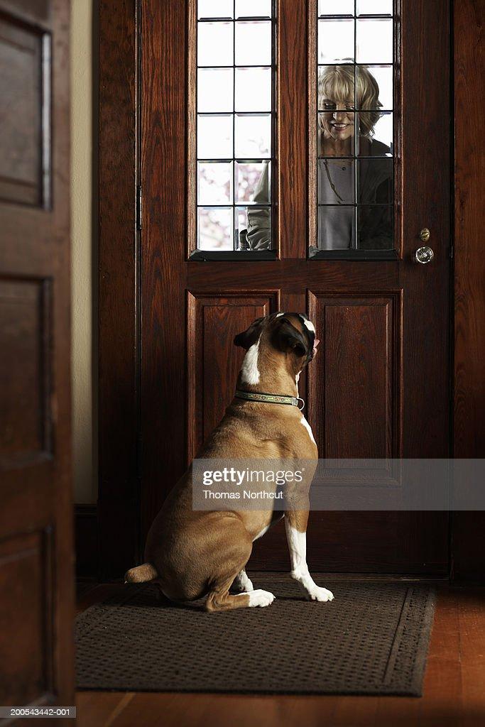 Dog Greeting Mature Woman At Front Door Woman Smiling
