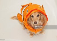 Dog Wearing Fish Costume Stock Photo | Getty Images