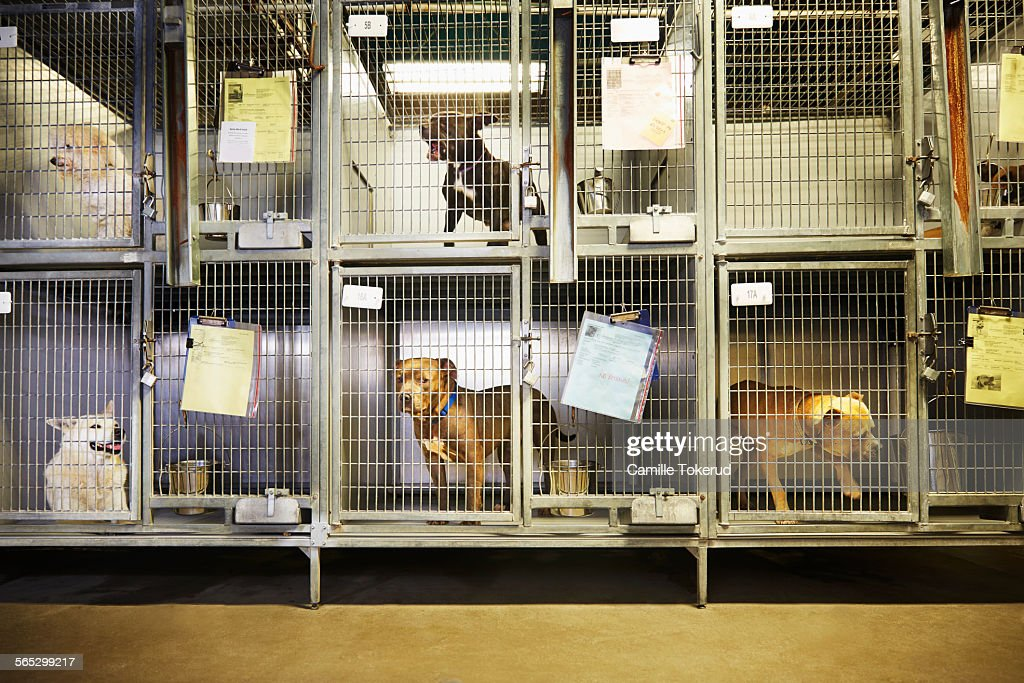 60 Top Animal Shelter Pictures Photos  Images  Getty