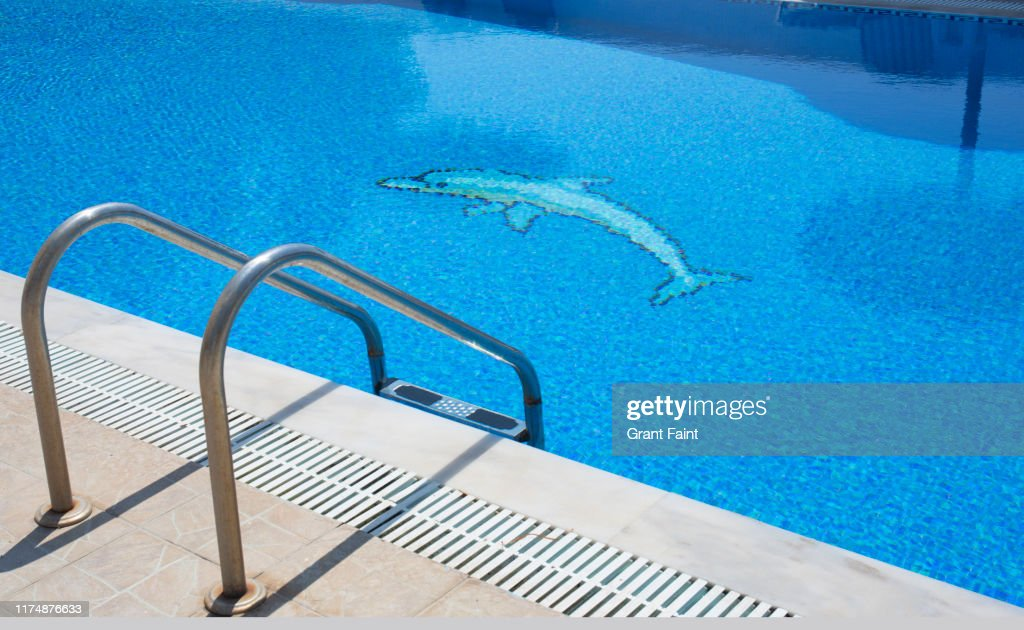 https www gettyimages com photos dolphin tile