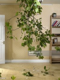 Domestic Living Room With Tree Branch Hanging Through Hole ...
