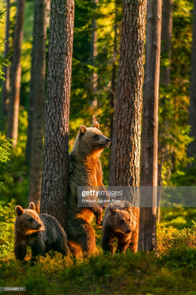 Rd.com humor funny stories & photos we know you can't resist cute animal pictures, so we gathered 1. 1 947 Of Taiga Animals Photos And Premium High Res Pictures Getty Images