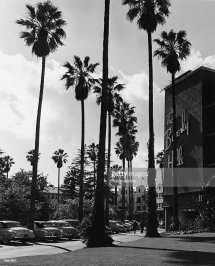 Beverly Hills Hotel California Palm Trees