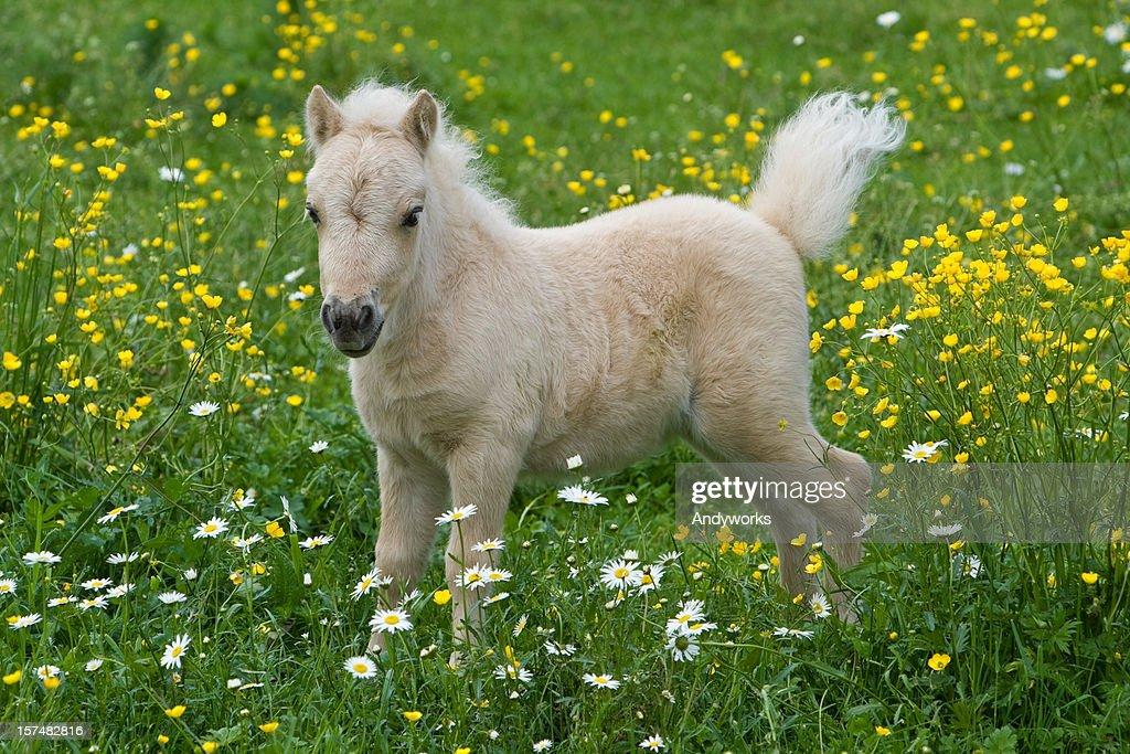Pony StockFotos und Bilder  Getty Images