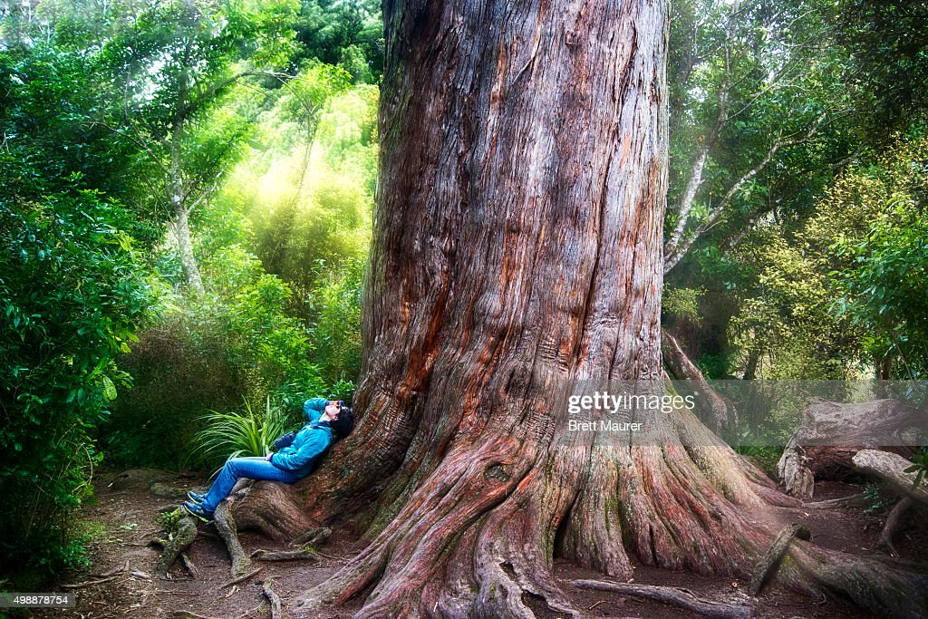 We take pride in the leadership opportunities we offer our students and in the high achievement results, we produce. Female Hiker Laying On Large Totara Tree In The Brighly Illuminated Peel Forest Of New Zealand High Res Stock Photo Getty Images