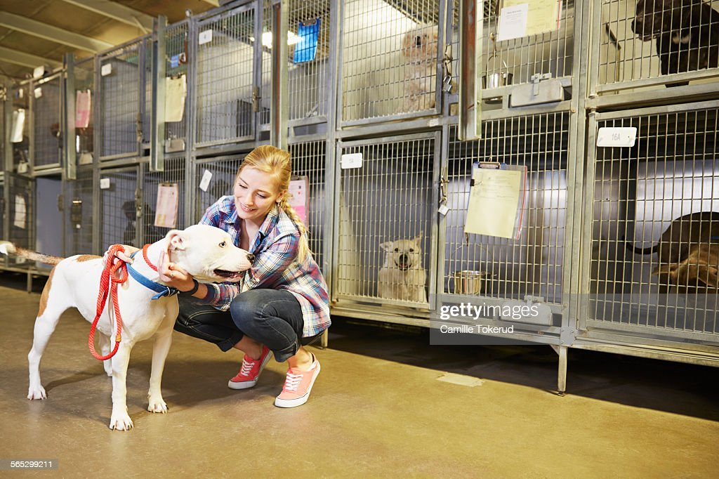 Animal Shelter Stock Photos and Pictures  Getty Images