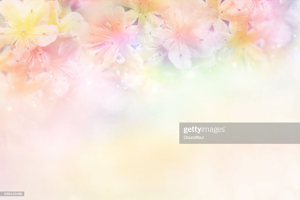 Free Pink Purple Flower Images Pictures And Royalty Free