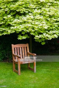Garden Chair Under A Tree Stock Photo | Getty Images