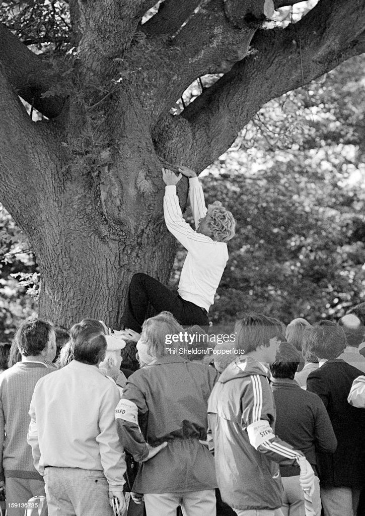 German golfer Bernhard Langer climbing an ash tree
