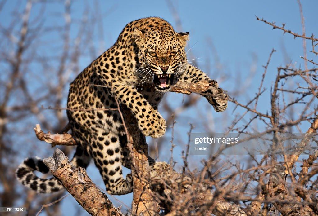 60 top leopard pictures