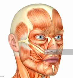 illustration of the anatomy of a male human face stock photo [ 1024 x 1024 Pixel ]