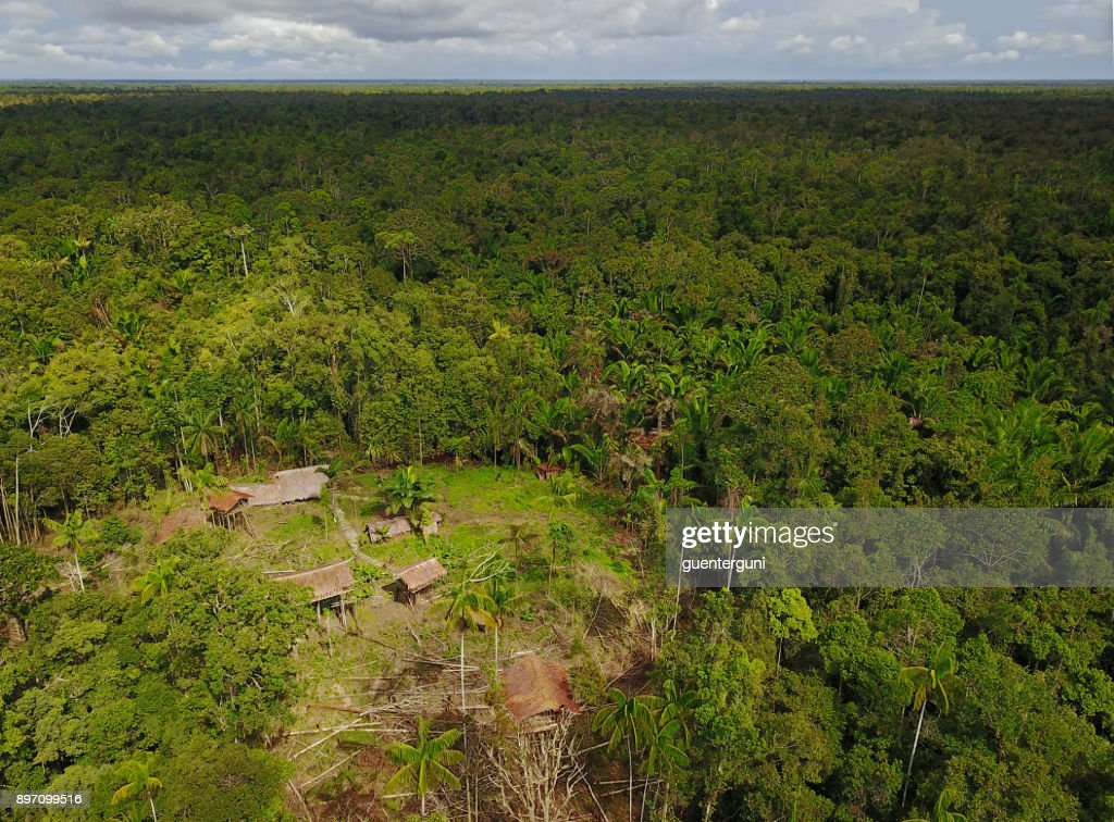 Korowai Tree Houses In A Jungle Clearing Westpapua Indonesia High Res Stock Photo Getty Images
