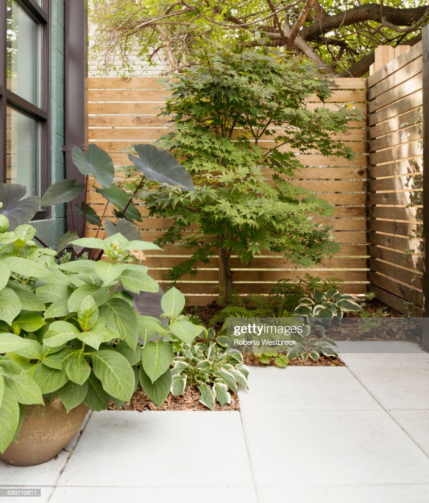 landscaping and patio of modern