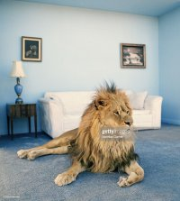 Funny Animals Stock Photos and Pictures