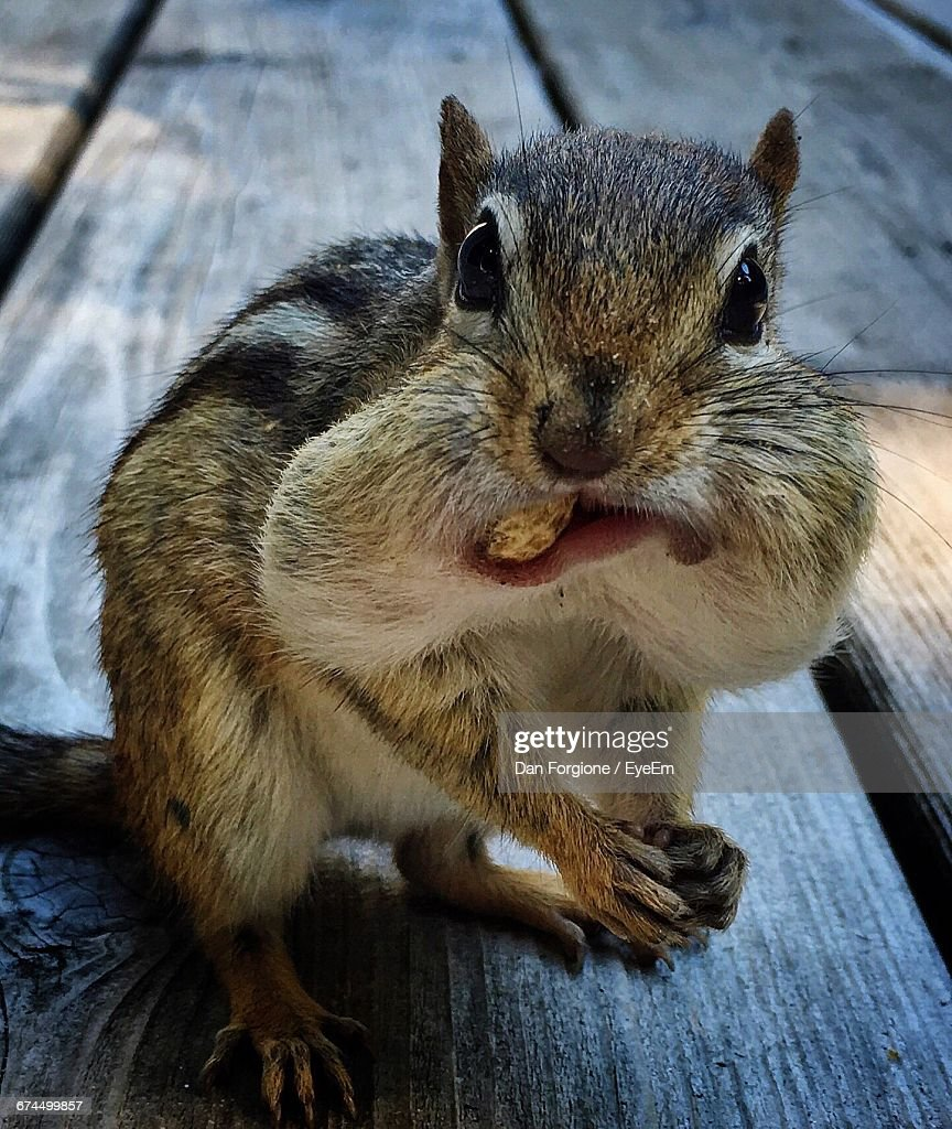 30 top chipmunk pictures