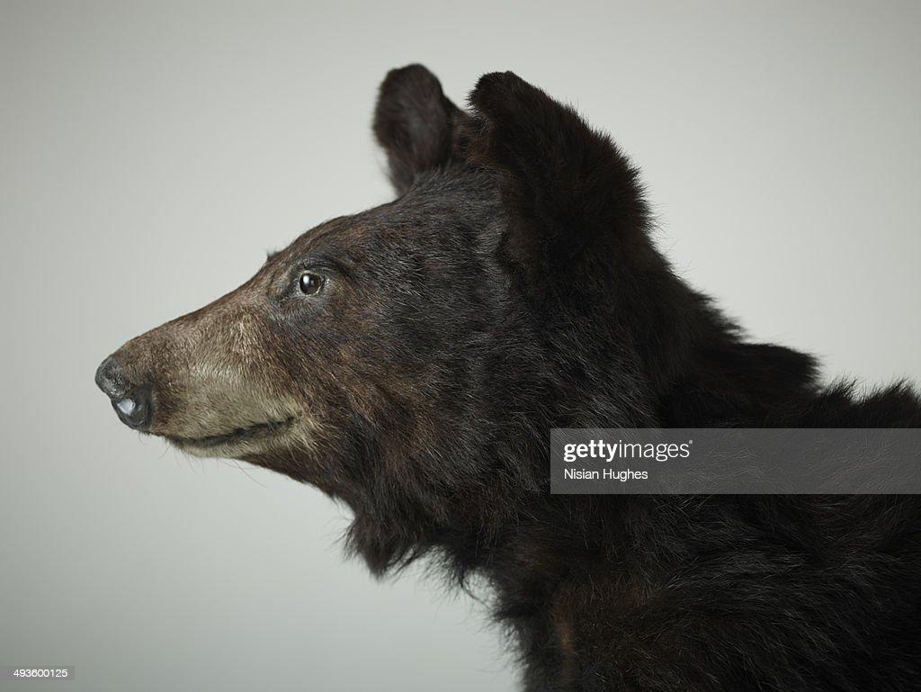profile portrait of brown