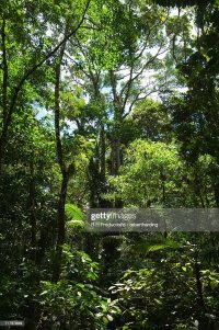 Rainforest Canopy In Arenal Hanging Bridges Park Arenal ...