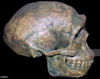 Homo Erectus Foto e immagini stock | Getty Images