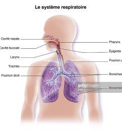respiratory tract drawing [ 1024 x 878 Pixel ]