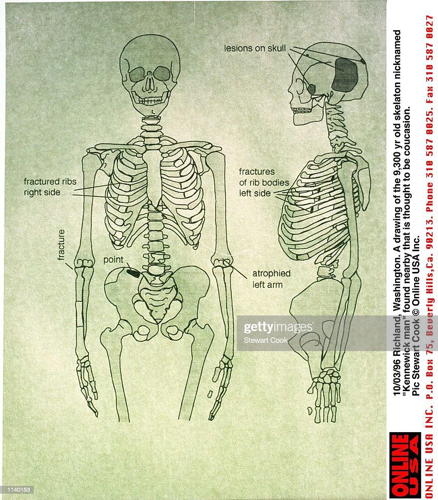 hight resolution of hip bone stock photos and pictures getty imagesrichland washington a labelled diagram of the 9300 yr