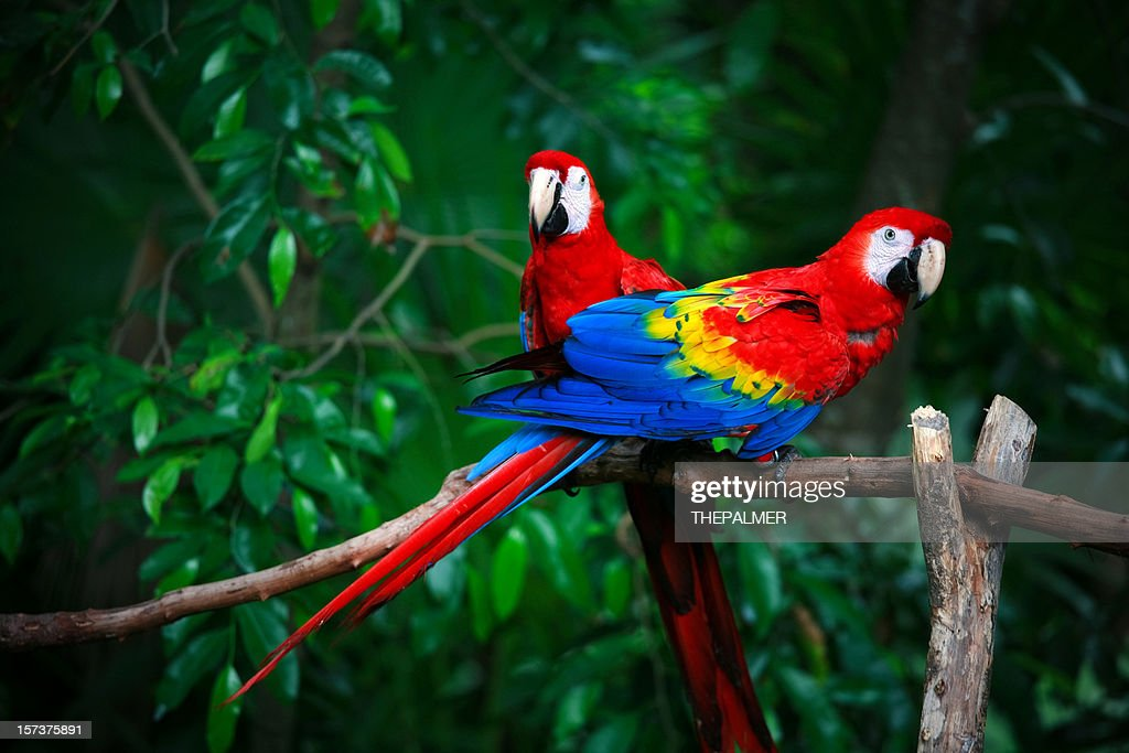 60 top parrot pictures