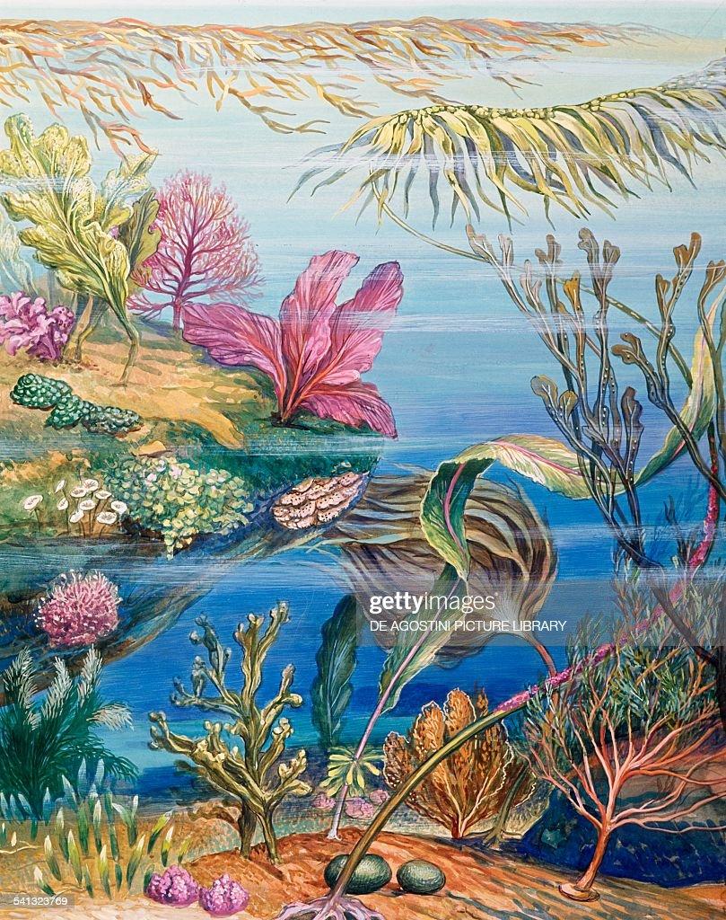 Sea Floor Drawing : floor, drawing, Seafloor, Seaweeds,, Drawing., Photo, Getty, Images