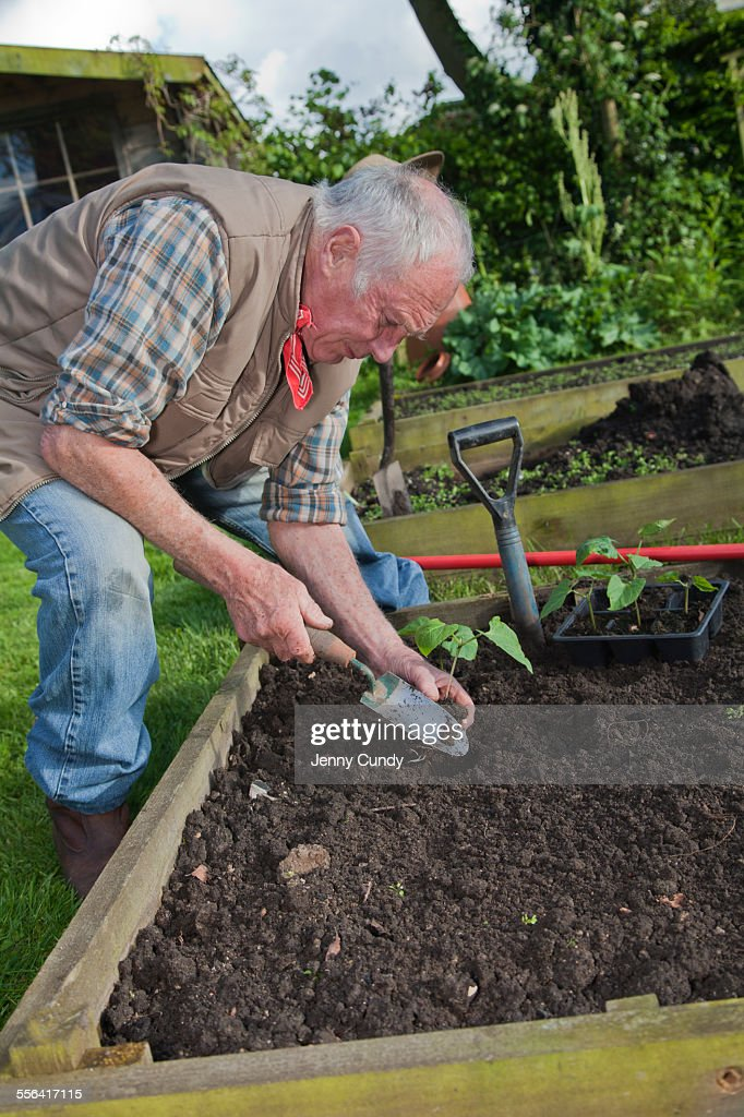 senior man planting seedlings