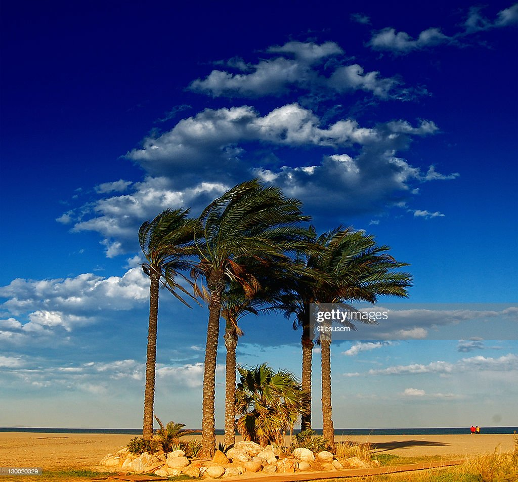 Summer Wind Stock Photo  Getty Images