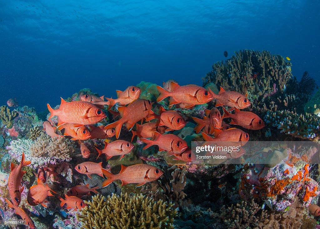 30 top bigeye fish