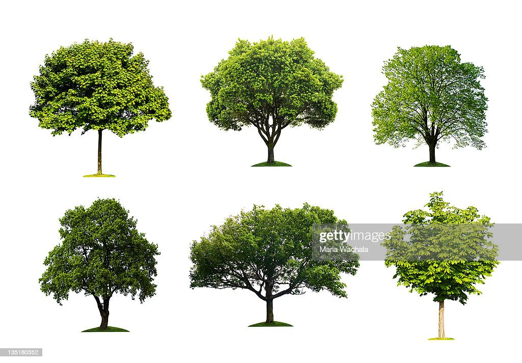 60 top tree pictures