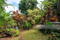 Tropical Garden Border Stock Photo | Getty Images