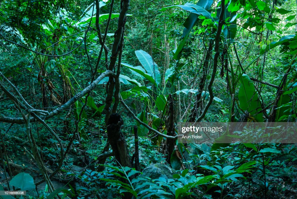 The current market favors stock pickers. 3 108 Tropical Evergreen Forest Photos And Premium High Res Pictures Getty Images