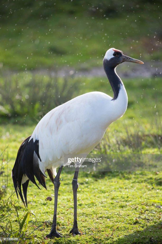 60 top crane bird