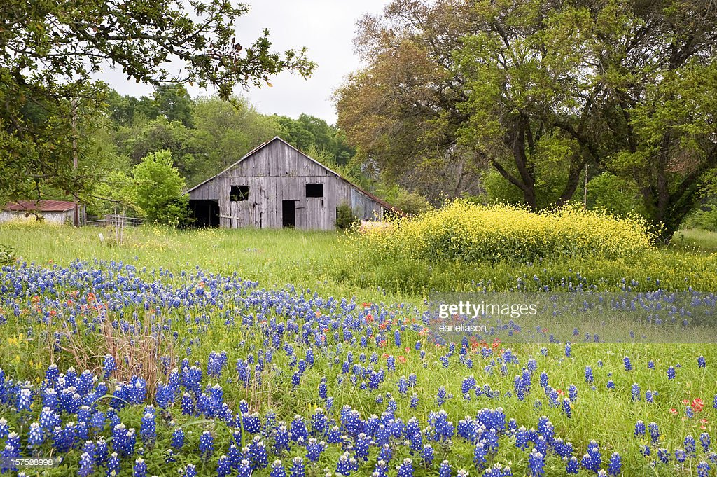 texas hill country stock