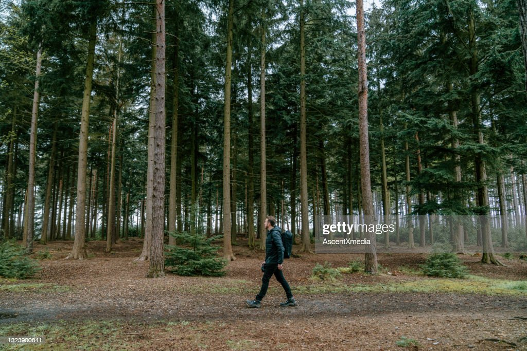 Path in dense forest public domain free image. 1 911 Dense Forest Photos And Premium High Res Pictures Getty Images