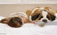 Young Woman Lying On Bed Next To St Bernard Dog Closeup ...