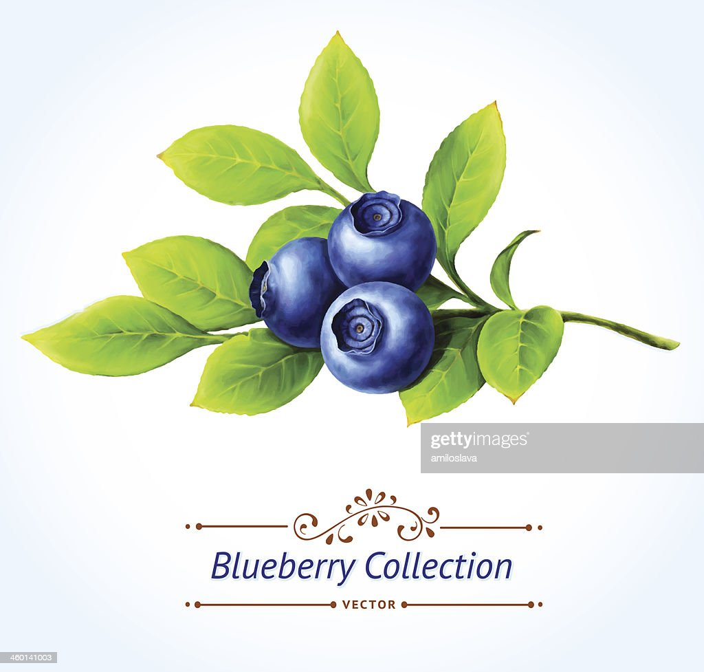 Free download of Blueberry Muffin clip art Vector Graphic