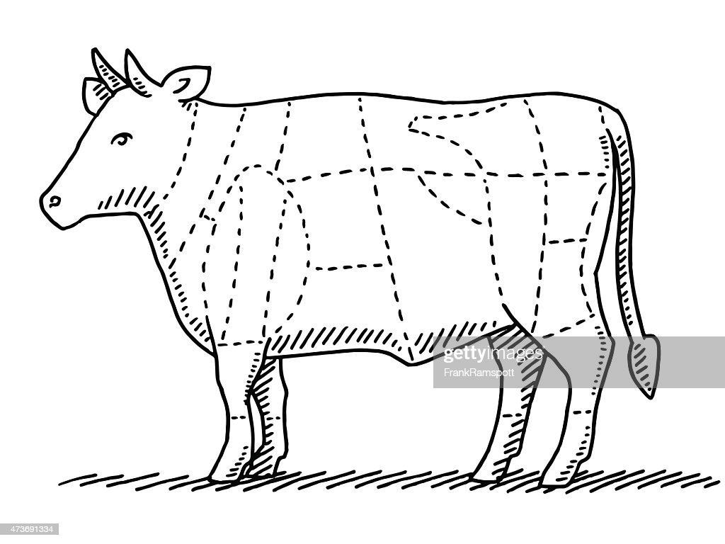diagram of meat cattle