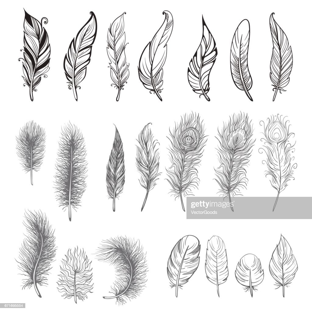 free feather clipart and